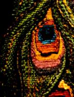 """Detalj """"Skogsfragment - Påfågelögon"""""""